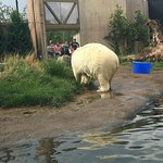 Photo of The Buffalo Zoo
