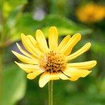 Prairie Flowere