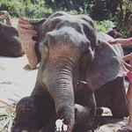 Best experience EVER! Couldn't fault this company, they do an amazing job with the elephants, Ha