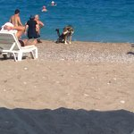 One of the dogs on the beach, terrible