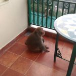 A Visitor at the balcony