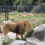 Photo of Paradise Valley Springs Wildlife Park