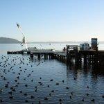 Photo of Lake Rotorua