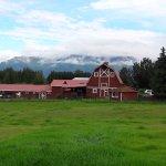 Photo of Musk Ox Farm