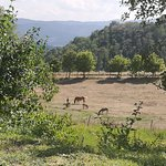 Photo of Agriturismo Casentino