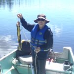 Fish I caught on Sideburned Lake...I also caught and released 8 Northern Pike that day.