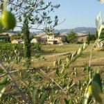 Photo of Agriturismo Il Mulinaccio