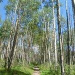 Escudilla Wilderness Trail