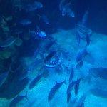Photo de The Deep