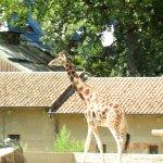 Foto de Antwerp Zoo (Dierentuin)