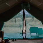 View from our tent to the Serengeti, with nets to protect from the bugs.