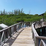 Walkways over the mangroves