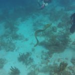 Eel swimming with us.
