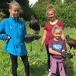 Foto de Ireland's School of Falconry