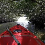 Kayaking through one of the tunnels in the Mangrove