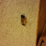 Room #2, had bed bugs spider that gave birth under sheets, blood on walls, floor and sheets & fo