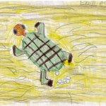 Hat unsere tochter nach Turtle Watching für Anne gemalt.