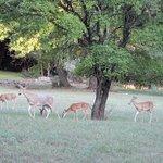 Deer hanging out near Inn