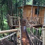 Tree House: suspension bridge and porch