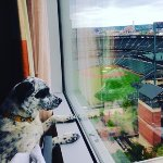 Rocky was excited to see Camden Yards but sad there was no game this weekend!