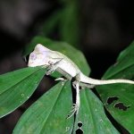 Photo of Costa Rica Jade Tours