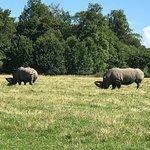 Photo of Knuthenborg Safari Park