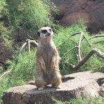 ZSL London Zoo Foto