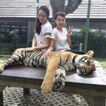 Phuket Tiger Kingdom