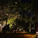 jardin de nuit