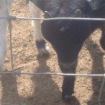 Bild från Cae'r Efail Farm