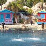 Good dolphin show