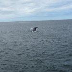 Photo de New England Aquarium Whale Watch