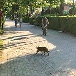 Eine der freilaufenden Katzen aus einem Cp-Geschäfte, immer wieder gern gesehen.
