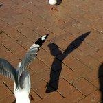 At Lake Roturua. Feeding the birds