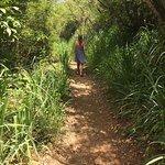 Lind point trail walk to honeymoon beach