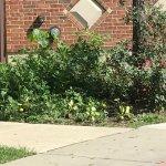 Foto de Hawthorn Suites by Wyndham Overland Park