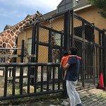 Φωτογραφία: Fukuyama City Zoo