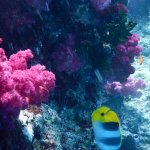 SCUBA was great! We haven't edited pics yet, but here's a taste of color