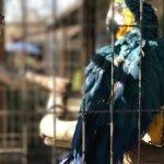 Foto de Los Dominicos Handicraft Village