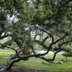 Cool tree.