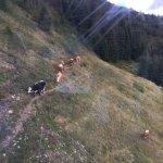Wildkogel bei Bramberg Foto