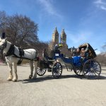 Central Park Carriage Rides - The Official NYC Horse Carriage Rides