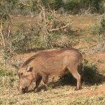Photo of Addo Elephant National Park