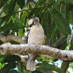 Malanda Falls Caravan Park Photo