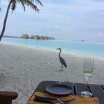 Photo of Gili Lankanfushi