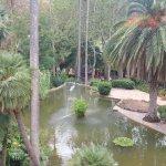 Vue plongeante sur un bassin entouré de palmiers