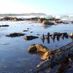Guided Otter Tracking Walk, along the Coastline, with Ter - our Expert Otter Tracker Guide