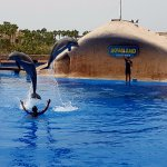 Dolphin show was great!