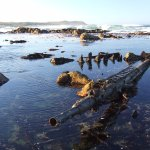 ne of the known shipwrecks, in the Cape of Good Hope Reserve - a view on my Otter Tracking Tour
