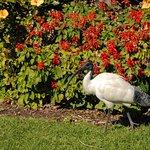Foto de Royal Botanic Gardens